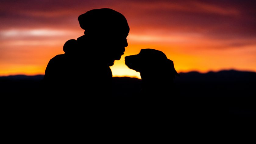 pet bonding